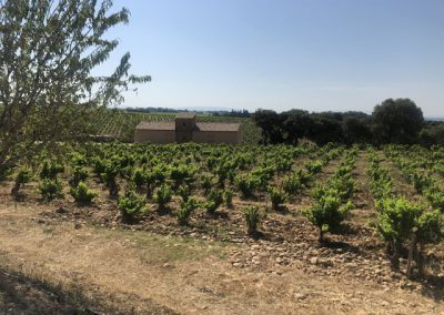 3 View of vineyards