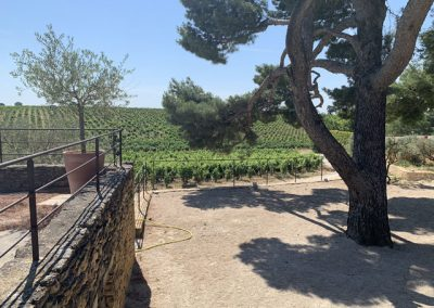 6 View of vineyards